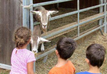 agriturismo con animali per bambini in puglia