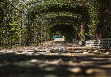 parco della biodiversità mediterranea catanzaro